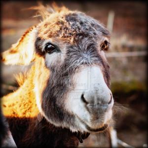cute donkey pics funny 8 cute donkey pics funny 10