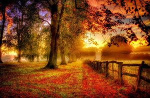 Majestic Autumn Nature Landscape
