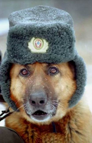 Check out these fashionable dogs with stylish hats. M sure these dogs ...