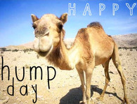 ... 02 11 13 41 06 hump day camel quotes quote days of the week wednesday