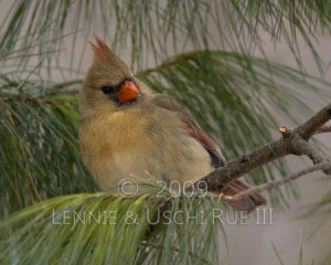 Video related with Cardinal Bird Quotes