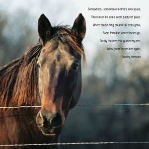 Horse Loss Poems: I Know Great Horses Live Again by Stanley Harrision