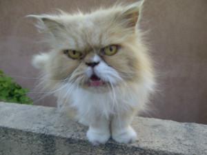 Angry Cat VP • 86FailAvenue