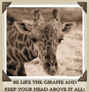 giraffe into giraffe quotes giraffe quotes giraffe quotes an ...