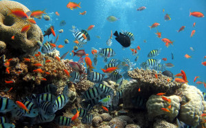 Tag: Ocean Life Wallpapers, Backgrounds, Photos, Pictures,and Images ...