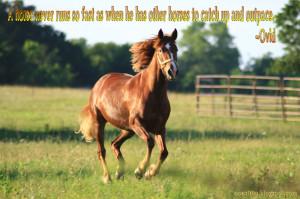 HORSE QUOTES WALLPAPER