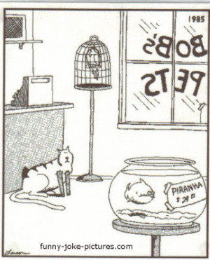 Funny Piranha Fish Cat Legs Cartoon Joke Picture Image