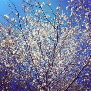 carry tiny blossoms