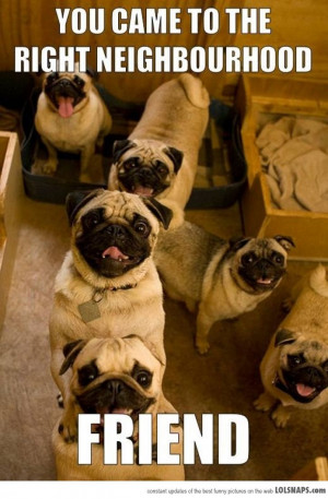 Why Thank You, Pugs...