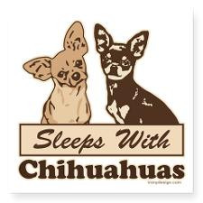 Funny Chihuahua Quotes