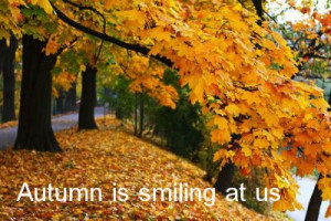 Fall Sayings