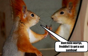 Squirrels with Funny Quotes