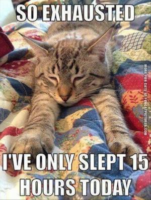 Tags: Lazy , Sleeping , Tired