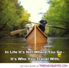 cute animal pictures with funny sayings motivational love life quotes ...
