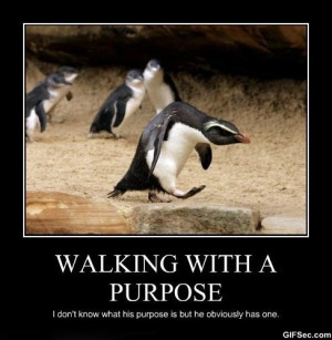 Funny-Pictures-Walking-with-a-purpose.jpg