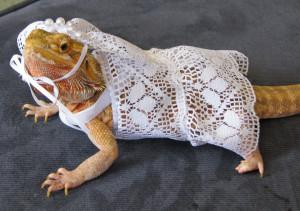 Bearded Dragon Costumes