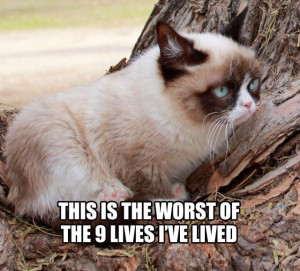 Cat Grumpy