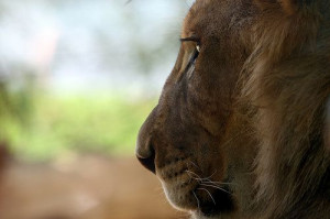 10 Great Quotes from Aslan