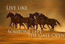 Horse Quotes For Sarah / by Maxine Chapman