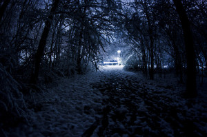 snow winter landscape trees path