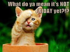 Nearly! Happy Thursday! More