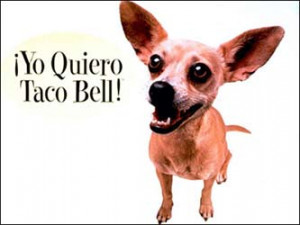 the famous and somewhat creepy taco bell chihuahua the taco