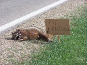 funny picture photo sign raccoon cst pic funny signs