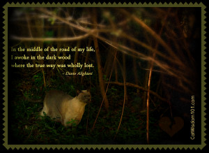 Quotes about cats death wallpapers