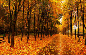 fall, trees, leaves, park, alley wallpapers nature - download on we ...