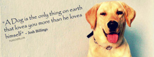 Labrador Retriever Cover Photo