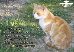... featuring famous quotes from animal lovers throughout history
