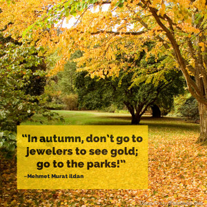In autumn, don't go to jewelers to see gold; go to the parks ...