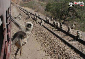 ... funny monkey monkey train funny travel pictures monkey in train funny