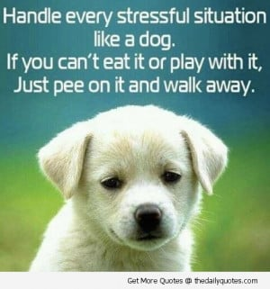 ... quotes » funny quotes » handle every stressful situation like a dog
