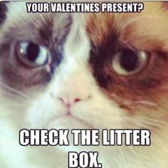 angry cat Funny Things, Cat Quotes, Coolest Cat, Grummpy Cat, Angry ...