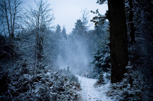 snow winter trees blue forest Woods winter woods snowy forest