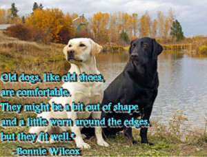 Quotes about Dogs: Popular Dog Breed With Inspirational Dog Quote