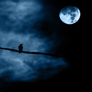 Crow and full moon photo by *L*u*z*A* @ flickr - taken in Columbia ...