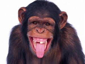 ... monkey downloads 2024 tags monkey chimpanzee wild animal views 2270