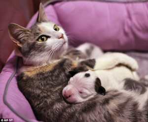 ... one of her own kittens after day-old dog was found abandoned in garage