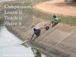 Compassion - We have a choice to live it, teach it, share it ...
