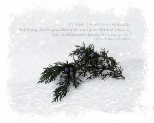 Everlasting, purity and Snow Falling on Cedars quote