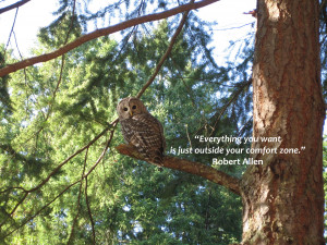 Free* Wallpaper – Wise Owl and Quote!