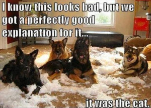 dog hair quotes funny dog quotes pinterest funny dog quotes funny dog ...