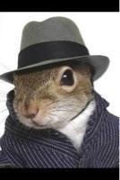 SquirrelQuotes