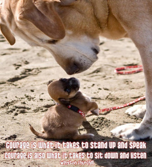 dogs #puppies #pets #animals #quotes