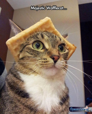 ... funny funny animals funny cat picture funny pictures humor majestic