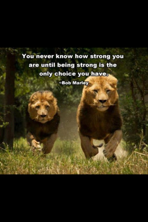 lions quotes about strength
