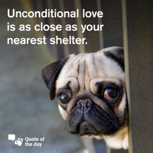 Adopt or foster a rescue dog.....do you have room to save a life or ...