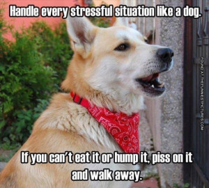 Dogs can handle stress